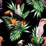 Uccelli tropicali e fondo nero senza cuciture delle foglie di palma Fotografie Stock