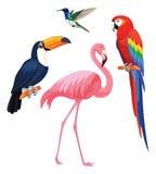 Uccelli tropicali esotici - fenicottero, tucano, colibrì, pappagallo Illustrazione di vettore immagini stock