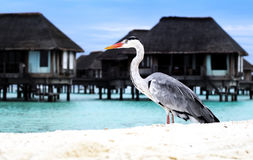 Uccelli tropicali sulla spiaggia Immagine Stock