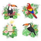 Uccelli tropicali svegli messi con gli elementi floreali illustrazione di stock