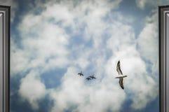 Uccelli in un cielo appannato blu Immagini Stock