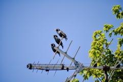 Uccelli in una fila Immagine Stock