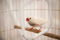 Uccelli in una gabbia immagine stock libera da diritti