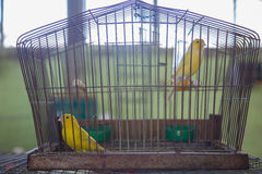 Uccelli in una gabbia Fotografia Stock Libera da Diritti