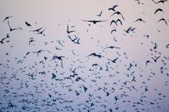 Uccelli, una siluetta del cielo Fotografie Stock Libere da Diritti