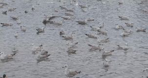 Uccelli in uno stagno in un parco di inverno video d archivio
