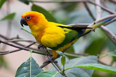Uccelli variopinti Immagini Stock