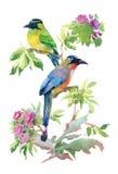 Uccelli variopinti dell'acquerello Fotografia Stock Libera da Diritti