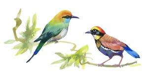 Uccelli variopinti dell'acquerello sui rami con le foglie verdi Immagini Stock Libere da Diritti