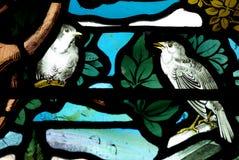 Uccelli in vetro macchiato fotografia stock libera da diritti