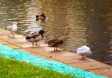 Uccelli vicino allo stagno Fotografia Stock