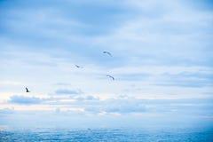 Uccelli in volo Fotografia Stock