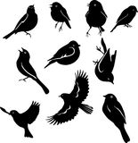 Uccellini un insieme Fotografia Stock Libera da Diritti