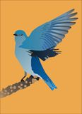 Uccellino azzurro della montagna Fotografie Stock