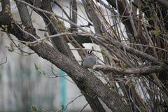 Uccellino che guarda i miei punti fotografia stock libera da diritti
