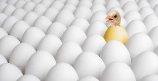Uccellino implume del pollo Fotografia Stock Libera da Diritti