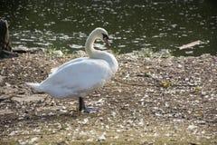Uccello 164 Immagine Stock
