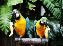 Uccello. Fotografie Stock
