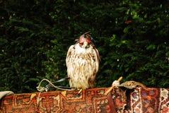 Uccello Immagini Stock Libere da Diritti
