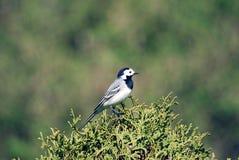 Uccello Immagine Stock