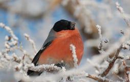 Uccello fotografie stock