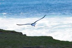 Uccello #3 immagine stock libera da diritti