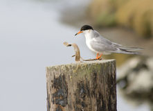 Uccello Fotografia Stock