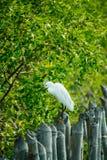 Uccello. 1 Fotografia Stock