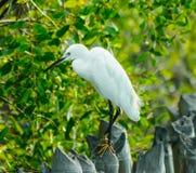 Uccello. 2 Fotografia Stock