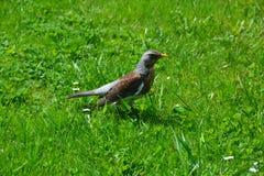 Uccello Immagine Stock Libera da Diritti
