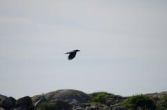 Uccello 9 immagine stock