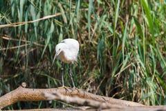 Uccello acquatico fotografie stock