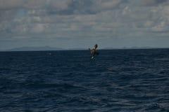 Uccello acquatico Karibik di pesca immagini stock