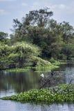 Uccello acquatico nel santuario di Thabbowa, Puttalam, Sri Lanka Immagine Stock