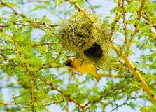 Uccello africano Fotografie Stock