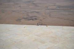 Uccello al bordo di Ramon Crater Makhtesh Ramon, riserva di Ramon Nature, Mitzpe Ramon, deserto di Negev, Israele immagine stock