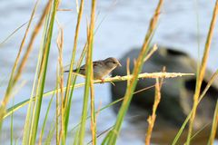 Uccello al parco di Inwood immagine stock libera da diritti