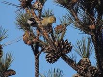 Uccello in albero Fotografia Stock