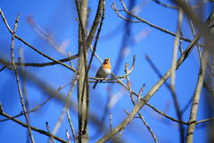 Uccello in albero Fotografie Stock