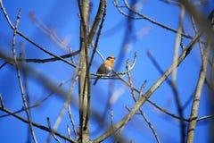 Uccello in albero Fotografia Stock Libera da Diritti