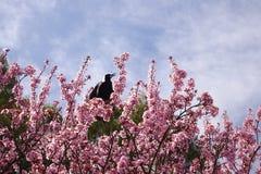 Uccello alla cima dell'albero Fotografia Stock Libera da Diritti