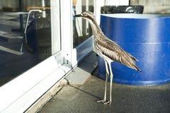 Uccello alla porta Immagini Stock