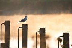Uccello in anticipo Immagini Stock Libere da Diritti