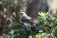 Uccello appollaiato Fotografia Stock