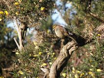 Uccello appollaiato su un albero Fotografie Stock Libere da Diritti