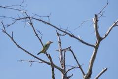 Uccello appollaiato su un albero morto Fotografia Stock Libera da Diritti