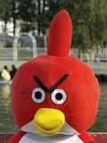 Uccello arrabbiato Fotografia Stock Libera da Diritti