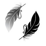 Uccello astratto della piuma Immagini Stock