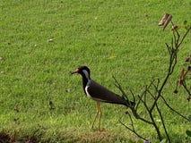Uccello in azienda agricola immagine stock