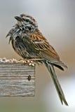 Uccello bagnato all'alimentatore Immagini Stock Libere da Diritti